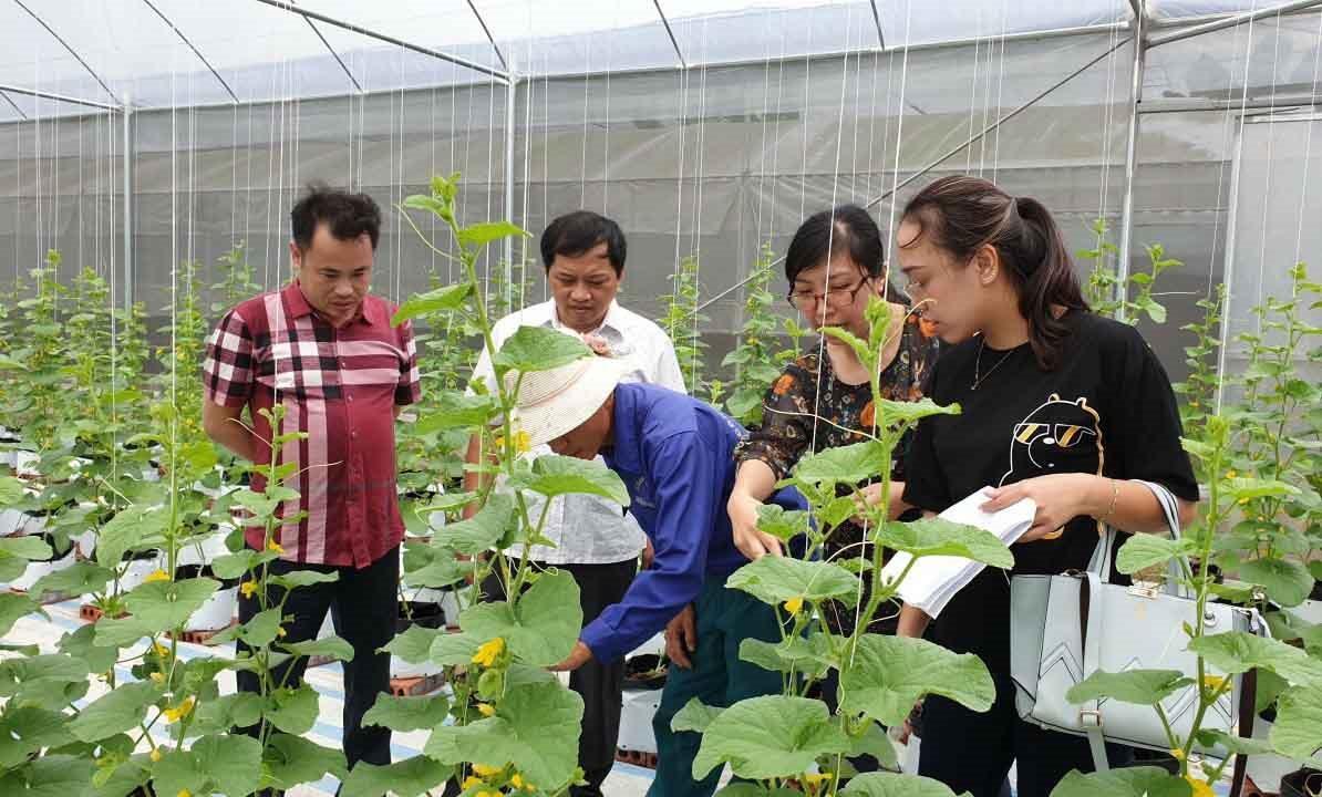 Quảng Ninh đưa công nghệ cao vào sản xuất nông nghiệp, góp phần bảo vệ môi trường